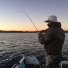 Bruce hooks up on an early morning midging fish