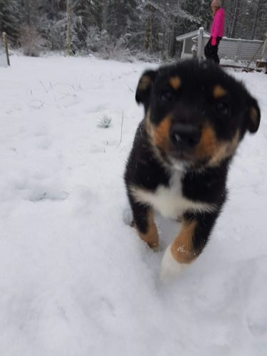 puppy enjoying snow