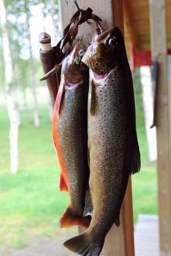 preparing fish7